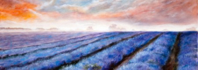 Misty Lavender Fields