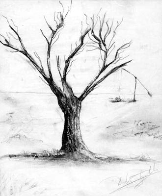 Tree - graphite pencil drawing by artist Darko Topalski