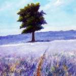 An Tree in a Lavender Field