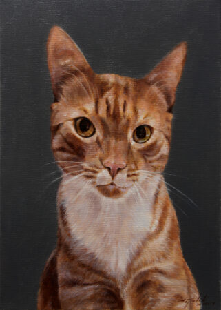 Fine Art - Felix the Cat - Original animal feline Oil Painting on Canvas by artist Darko Topalski